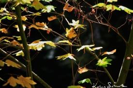 Fall, Illuminated