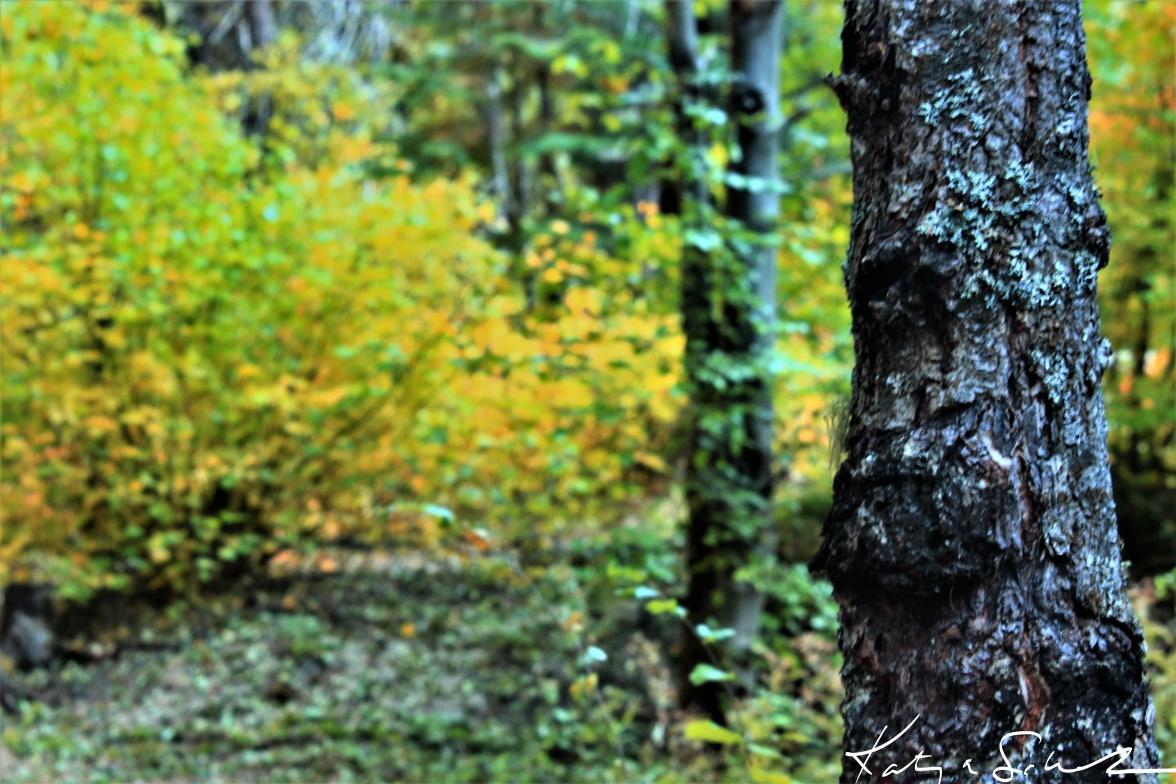 Twilight woods